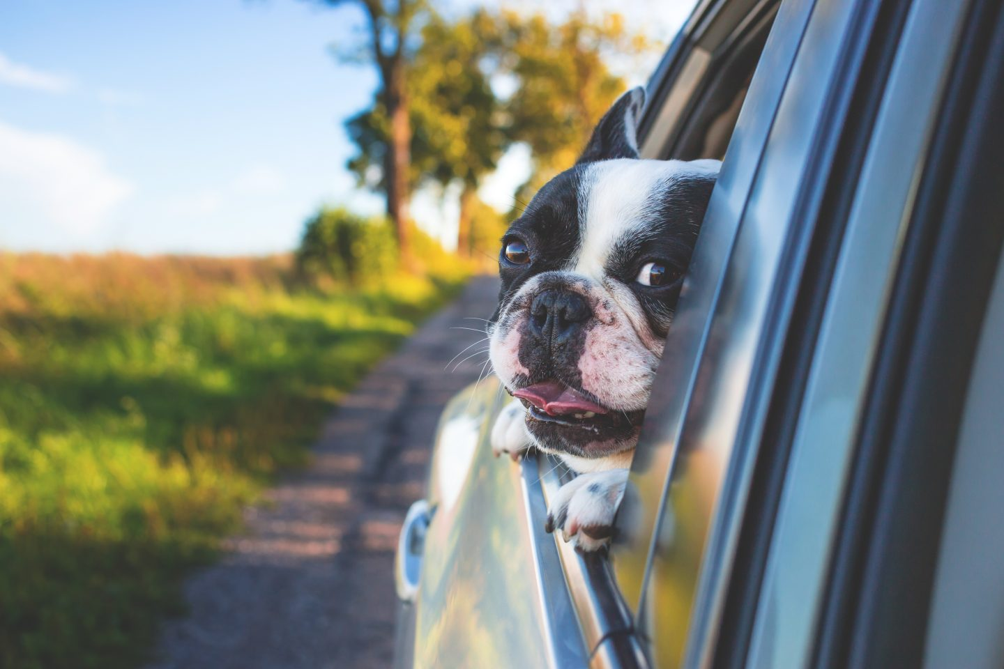 Fancy getting a dog? PART 1 – I've rented one for a week!